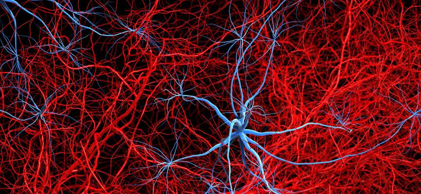 L'angiologie : quelles sont les pathologies traitées ?
