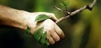 Naturopathie : les différentes techniques
