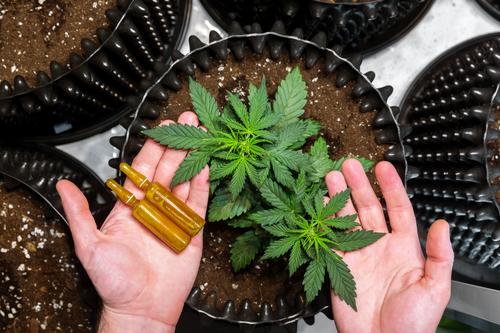 La réforme française du cannabis CBD médical est à l'ordre du jour en France