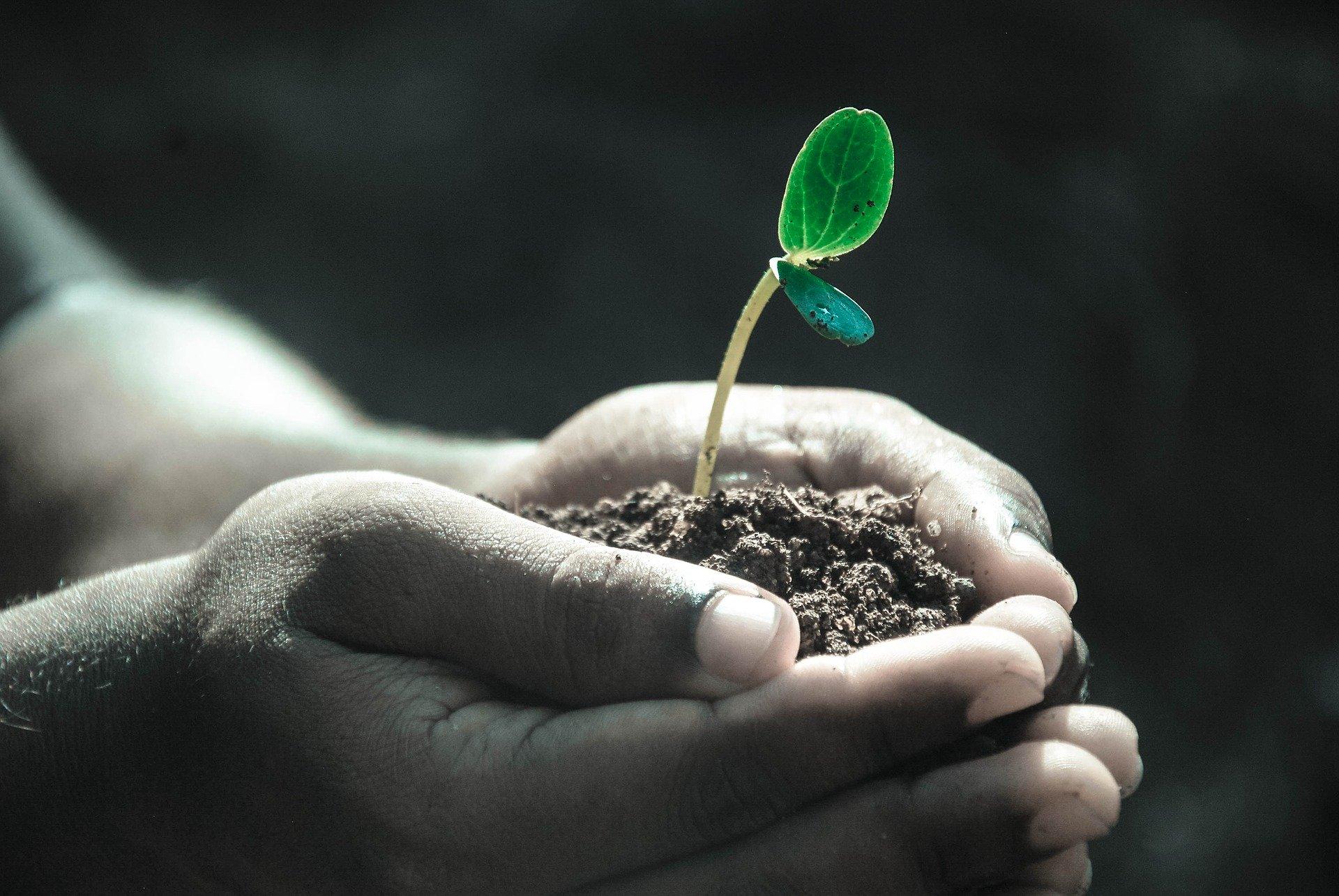 Où se fournir en produits naturels pour la santé ?